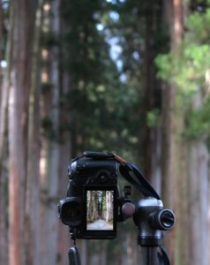 canon camera in the forest